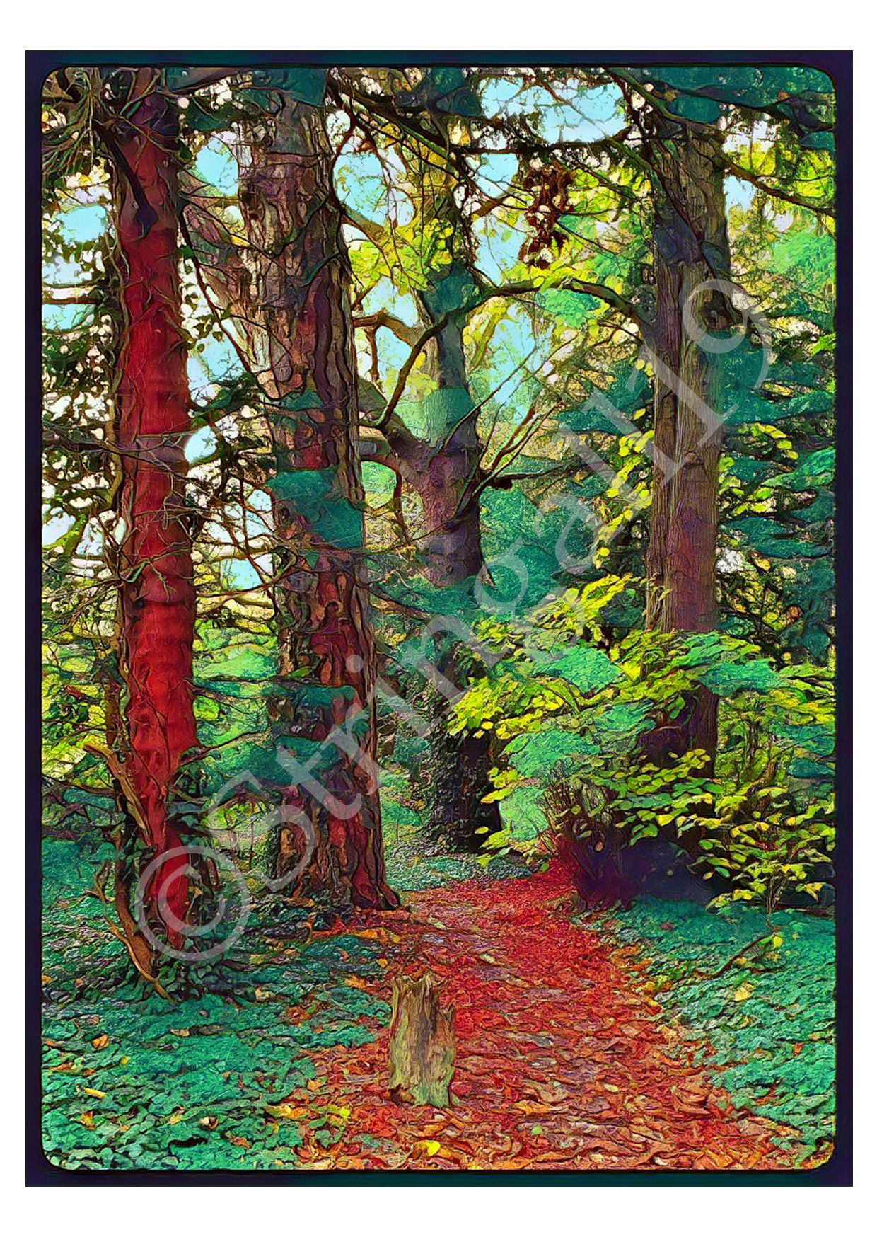 CARDS_forest-WM