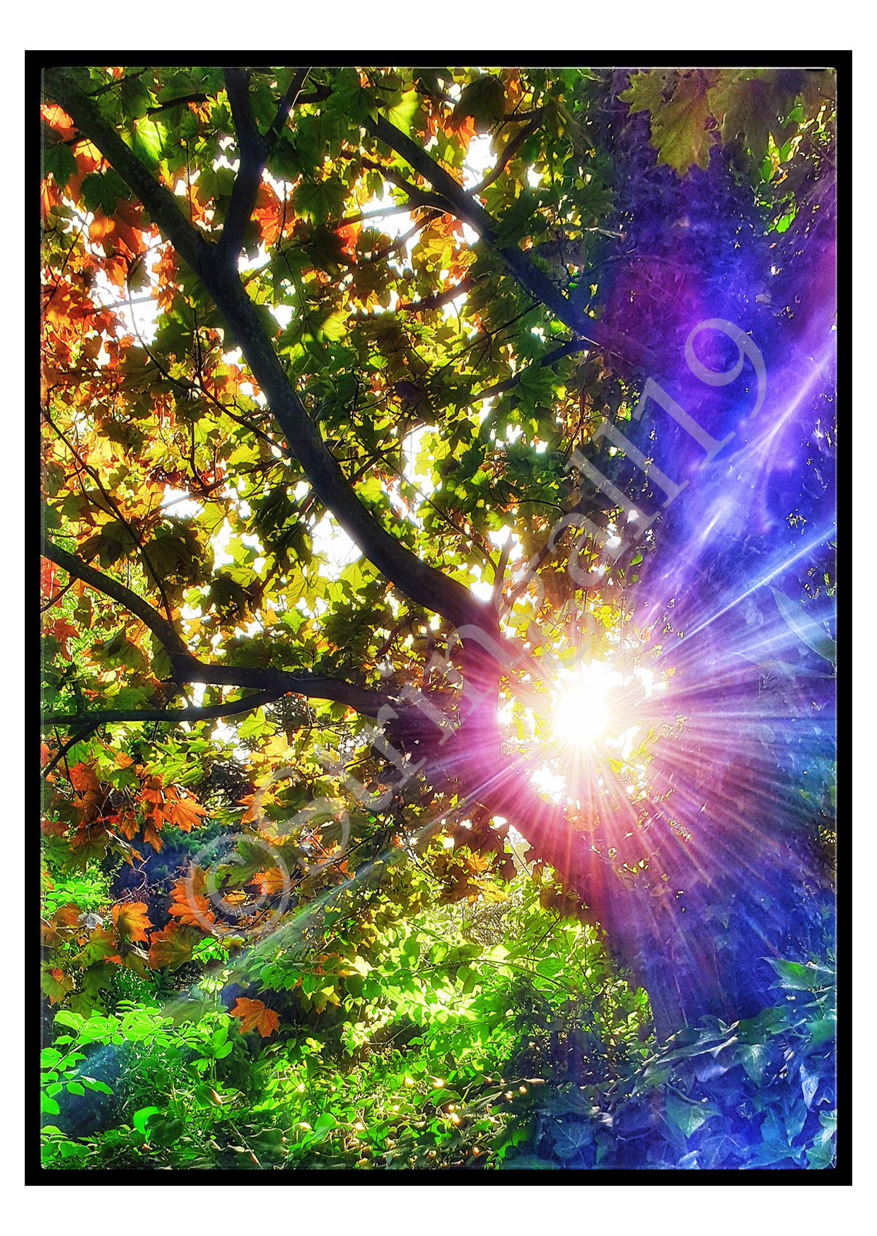 CARDS_sunrainbowtree-wm_edited-1